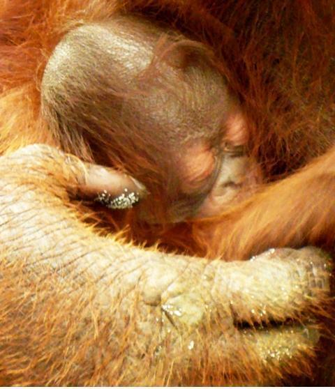 Dedek's newborn son