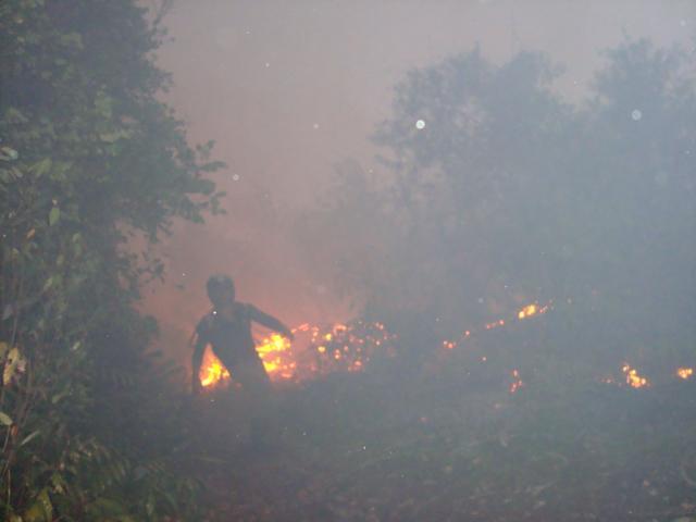 Sebangau Forest Fires
