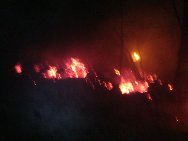 Sebangau Fires