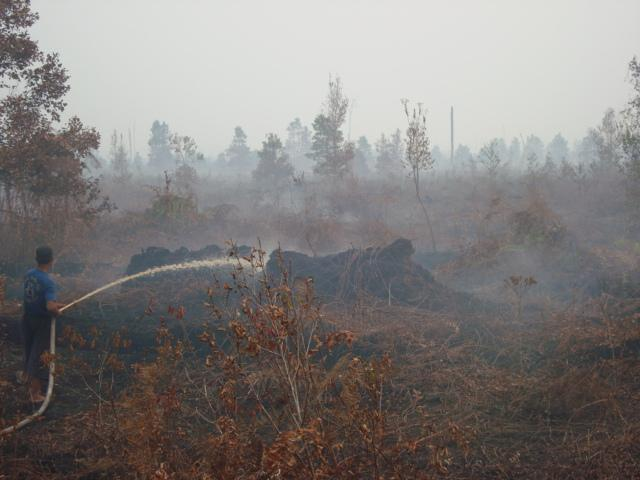 Burnt peat forest (CIMTROP Sept 09)
