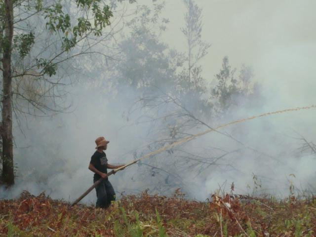 Putting out forest fires, Sabangau, Borneo (CIMTROP Sept 09)
