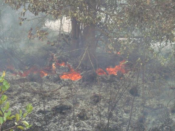 Fires in Kalampangan, Kalimantan, Indonesian Borneo