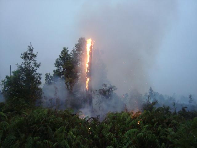 Kalampangan tree on fire