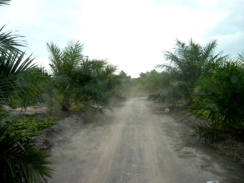 Goodbye oil palm plantation