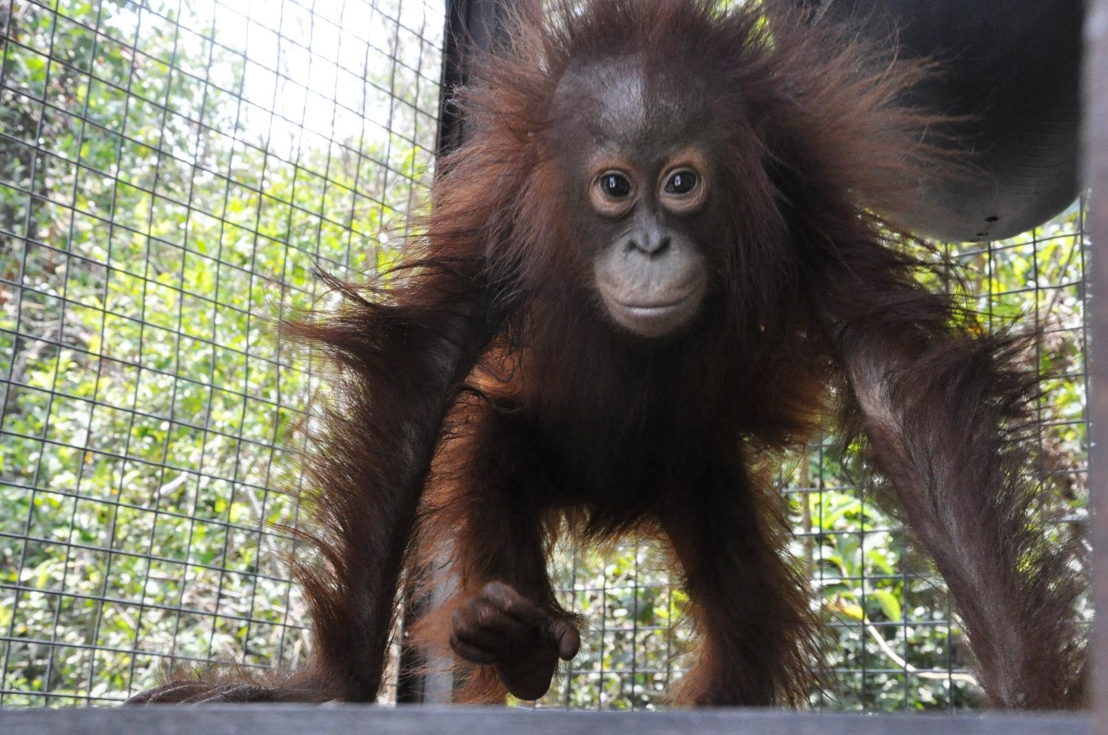 Blog — Orangutan Foundation