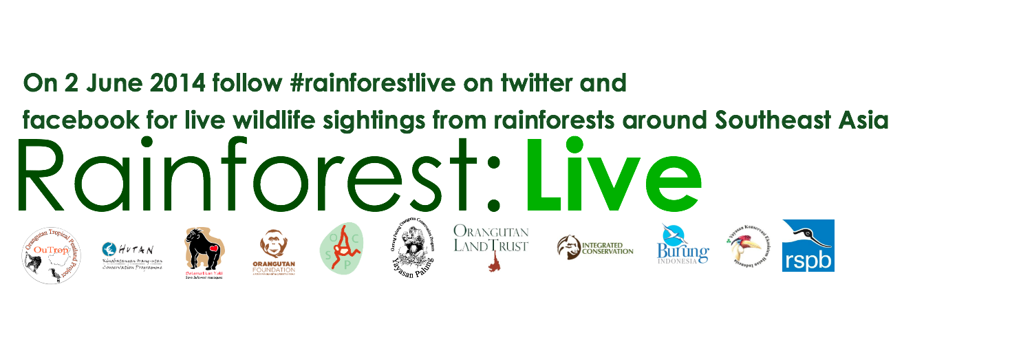 Rainforest Live Large 2