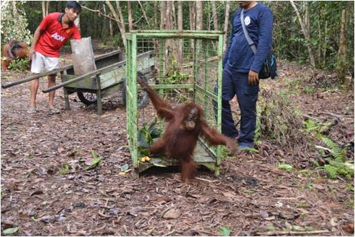 leave cage Kuala