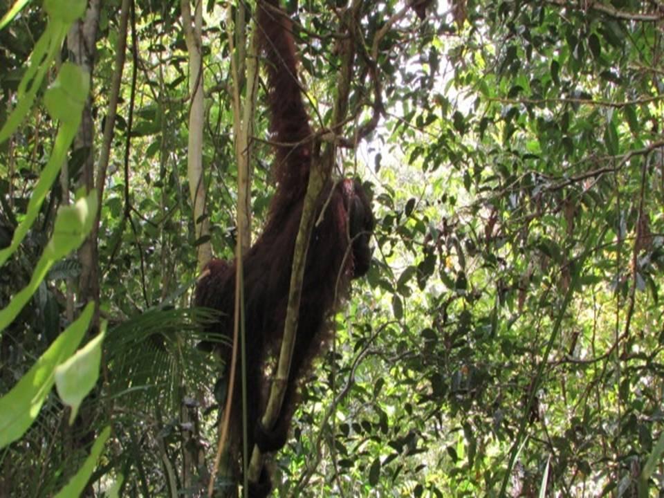 raja trees