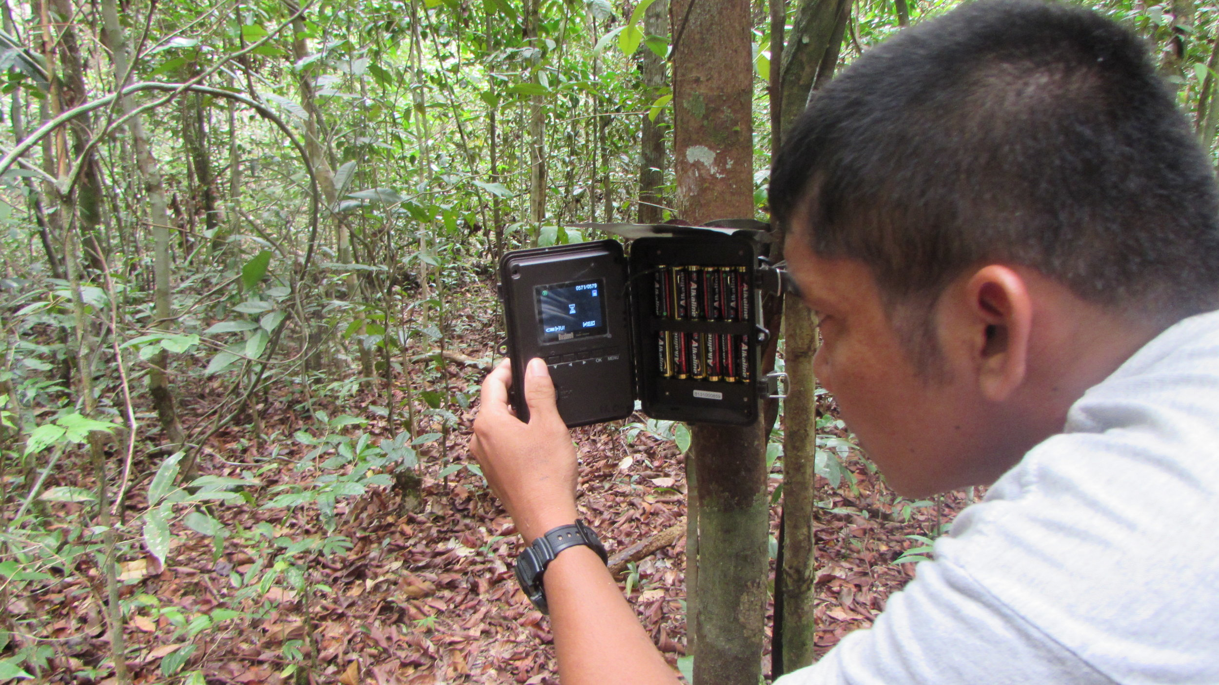 Pondok Ambung staff member checking the camera traps for new images