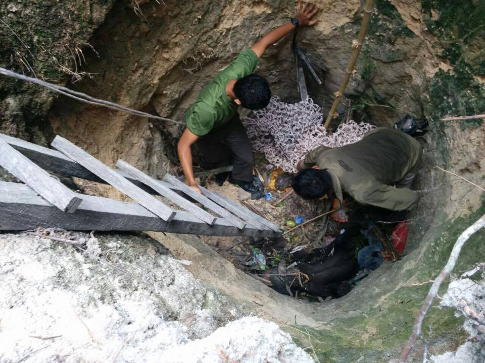 OF staff used a net to lift the bear out of the well