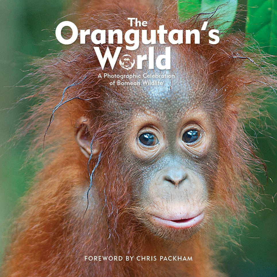 The Orangutan's World - available for purchase
