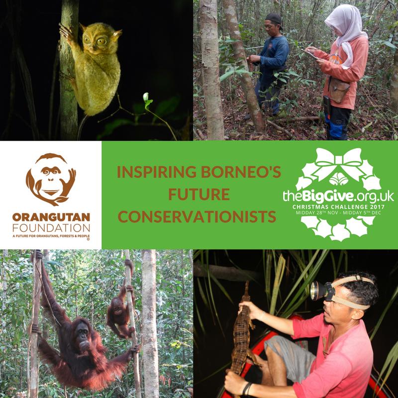 Image© Orangutan Foundation.