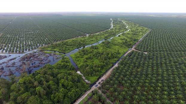 Remnant forest surrounded by oil-palm plantation