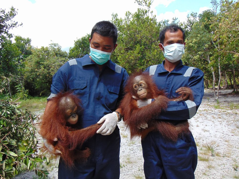 Orphaned orangutans Adib (left) and Mona (right) with Orangutan Foundation field assistants.