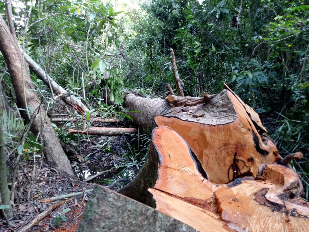 February 2018: illegal logging within protected area buffer zone