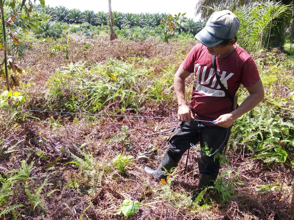 Measuring out and survey of agroforestry demonstration plot (oil-palm plantation in the background).