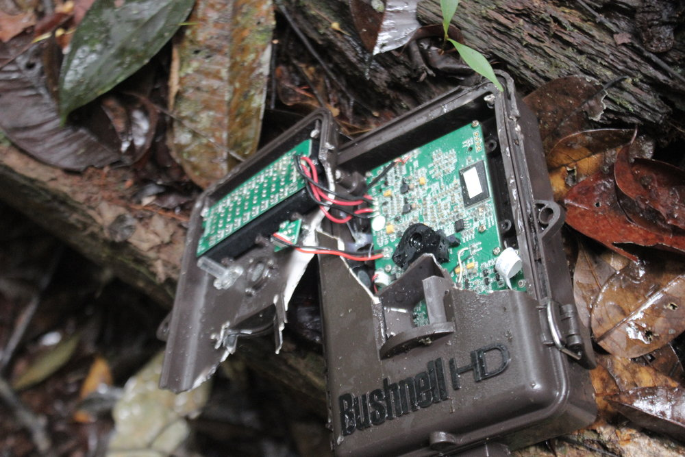 Damaged camera trap
