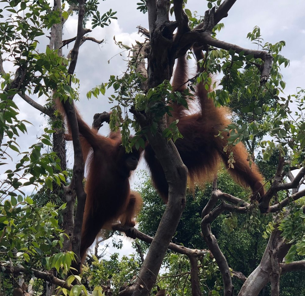 Play time! Okto and Shifa at Camp Buluh January 2019