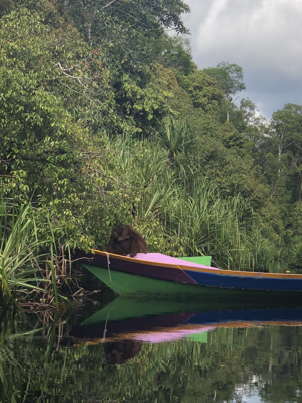 Female orangutan, Sheila in Camp Gemini's longboat.