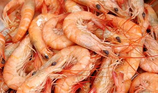 boiled shrimp.jpg