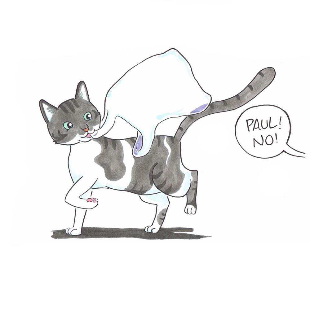 pet-portrait-cat2,1000pxw.jpg