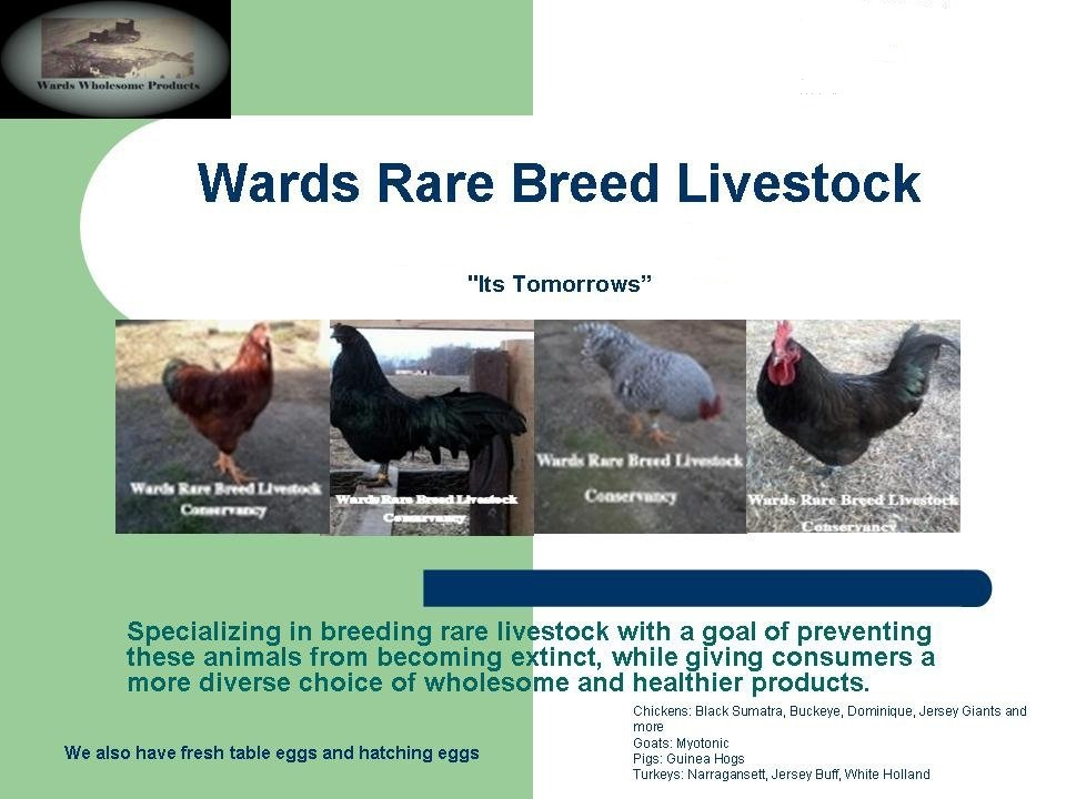 Wards Rare Breeds Livestock And American Bulldogs