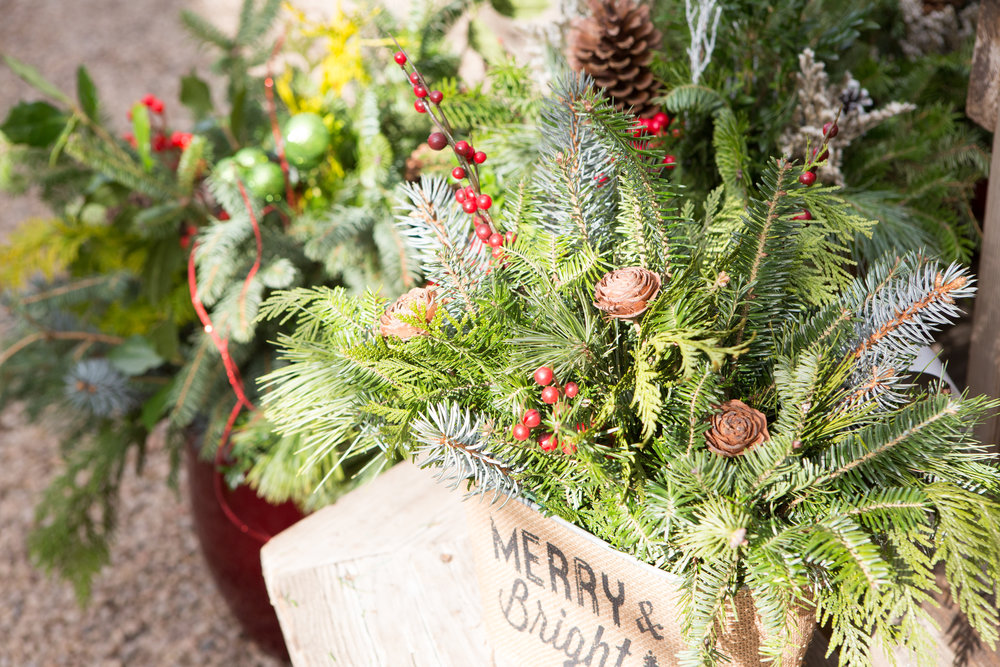 Holidays at the wedge - We love the holidays at The Wedge and plan all year to bring you plants and decor to make your holidays more festive!