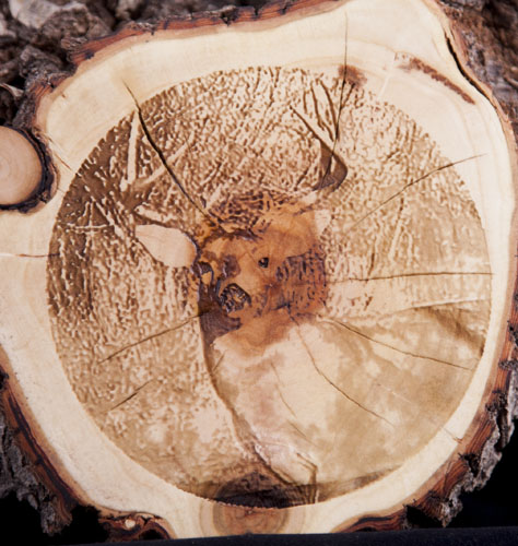 Deer Wood.jpg