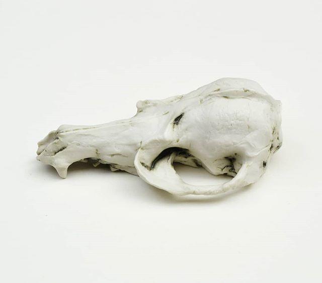 Fox #scull made in #porcelain . . #ceramicsculpture #animalsculpture #ceramics #animals #contemporaryart #contemporaryartists #ceramicshop #scull #artforsale #mariekeringel