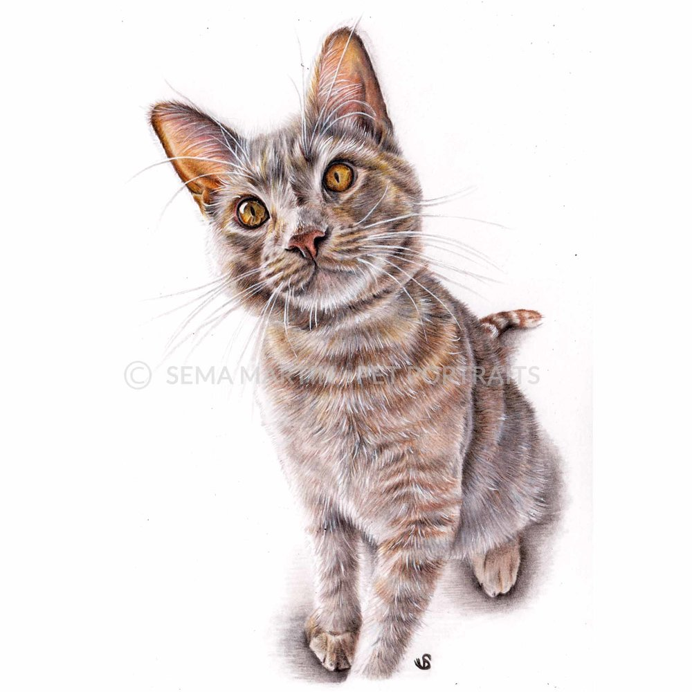 'Leo' - USA, 5.8 x 8.3 inches, 2018, Colour Pencil Cat Portrait by Sema Martin