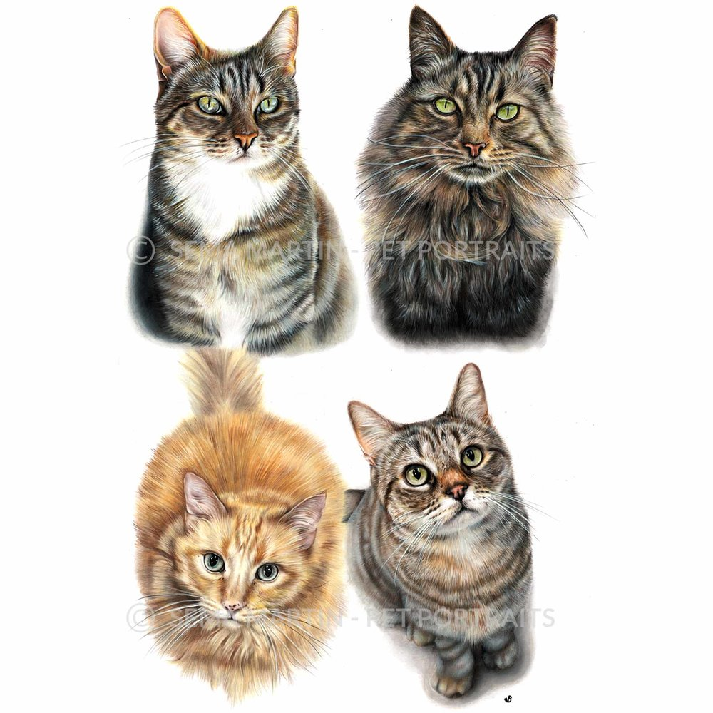 'Dewie, Bubbie, Clyde and Woo Woo' - USA, 16 x 23 inches, 2018, Colour Pencil Cat Portrait by Sema Martin