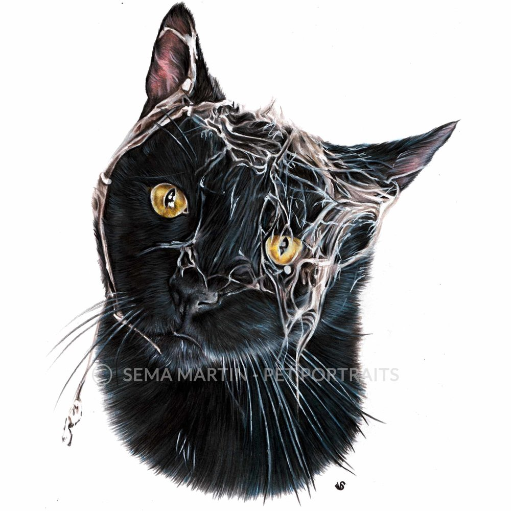 'Tank' - USA, 8.3 x 11.7 inches, 2018, Colour Pencil Cat Portrait by Sema Martin