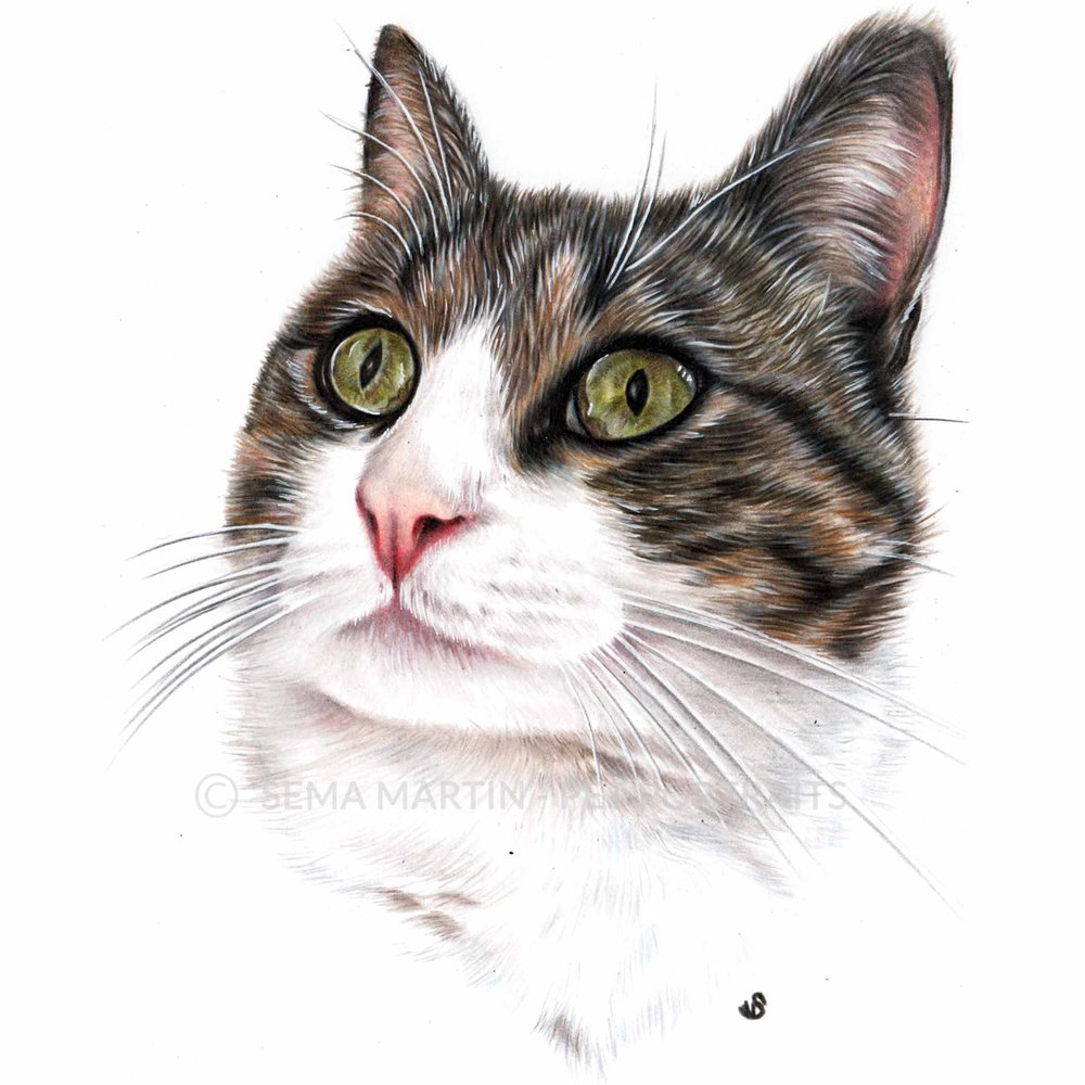 'Jessica' - SPA, 5.8 x 8.3 inches, 2018, Colour Pencil Cat Portrait by Sema Martin