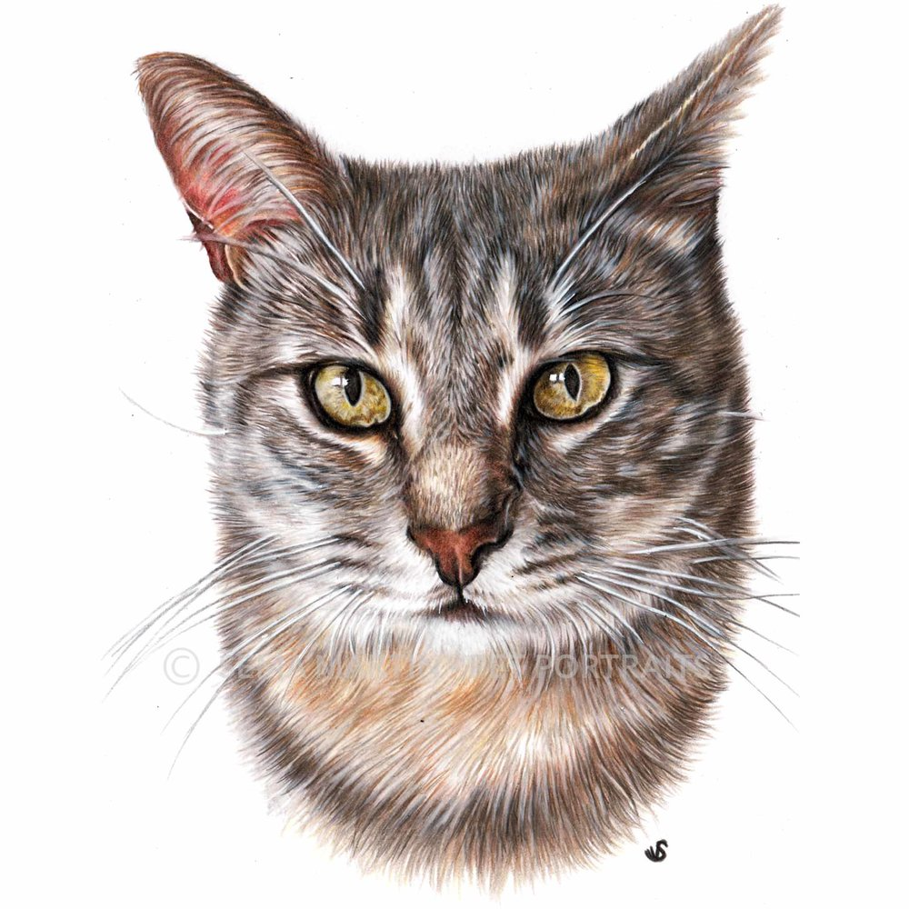 'Jeriko' - SPA, 5.8 x 8.3 inches, 2018, Colour Pencil Cat Portrait by Sema Martin