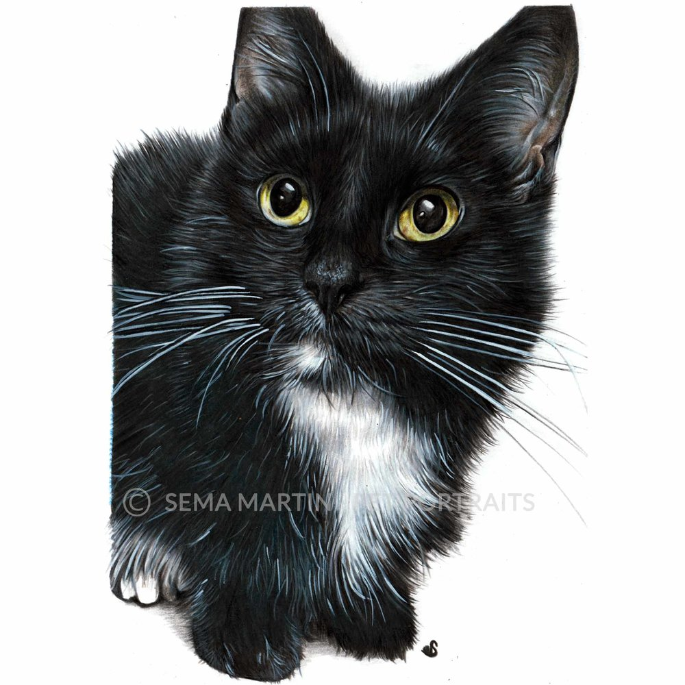 'Charlie' - USA, 5.8 x 8.3 inches, 2018, Colour Pencil Cat Portrait by Sema Martin