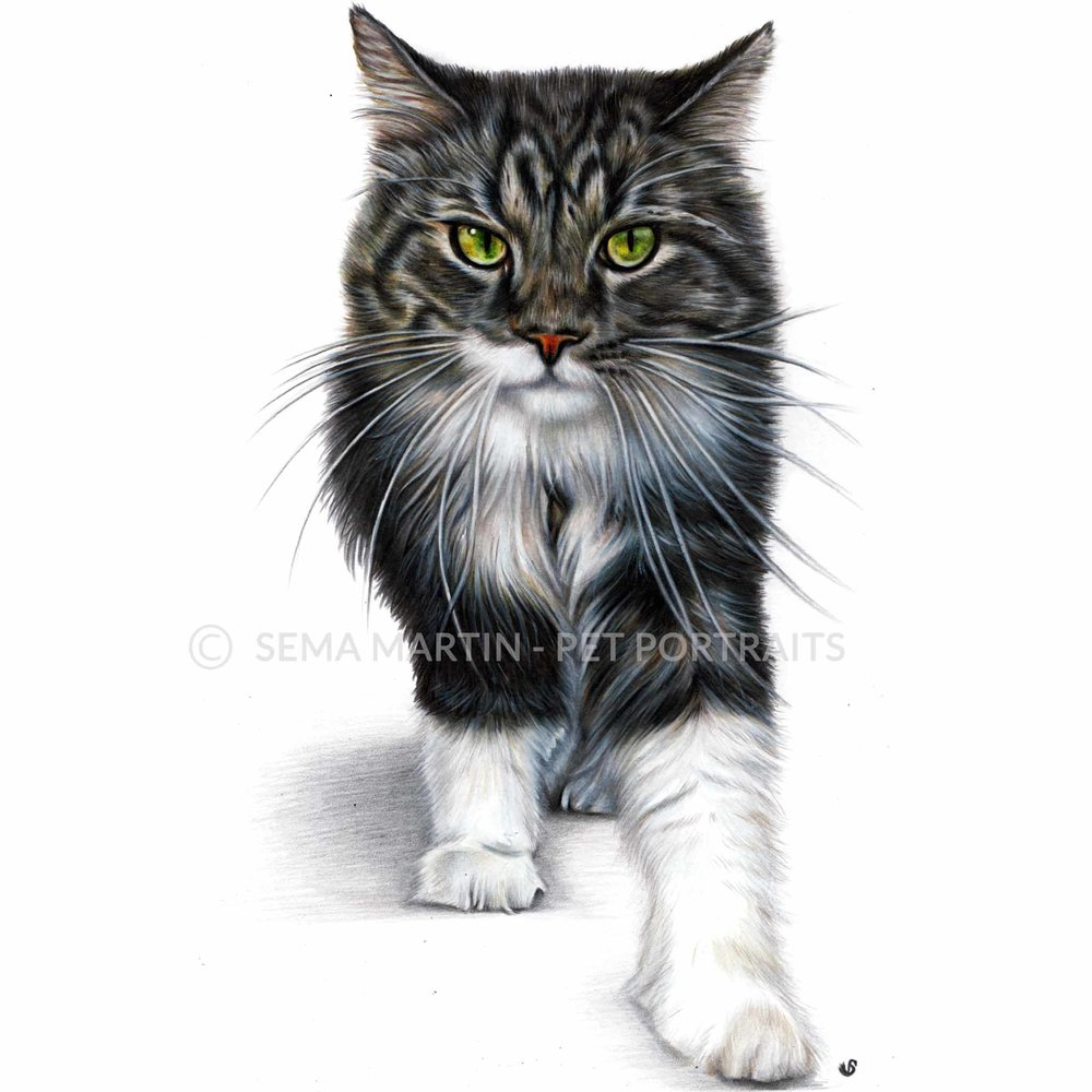 'Megatron' - USA, 8.3 x 11.7 inches, 2018, Colour Pencil Cat Portrait by Sema Martin
