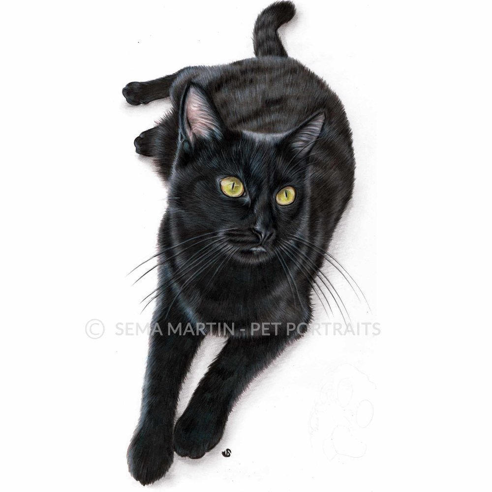'Elsa' - UK, 8.3 x 11.7 inches, 2018, Colour Pencil Cat Portrait by Sema Martin