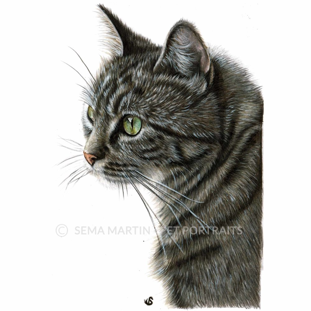 'Belle' - AUS, 5.8 x 8.3 inches, 2018, Colour Pencil Cat Portrait by Sema Martin