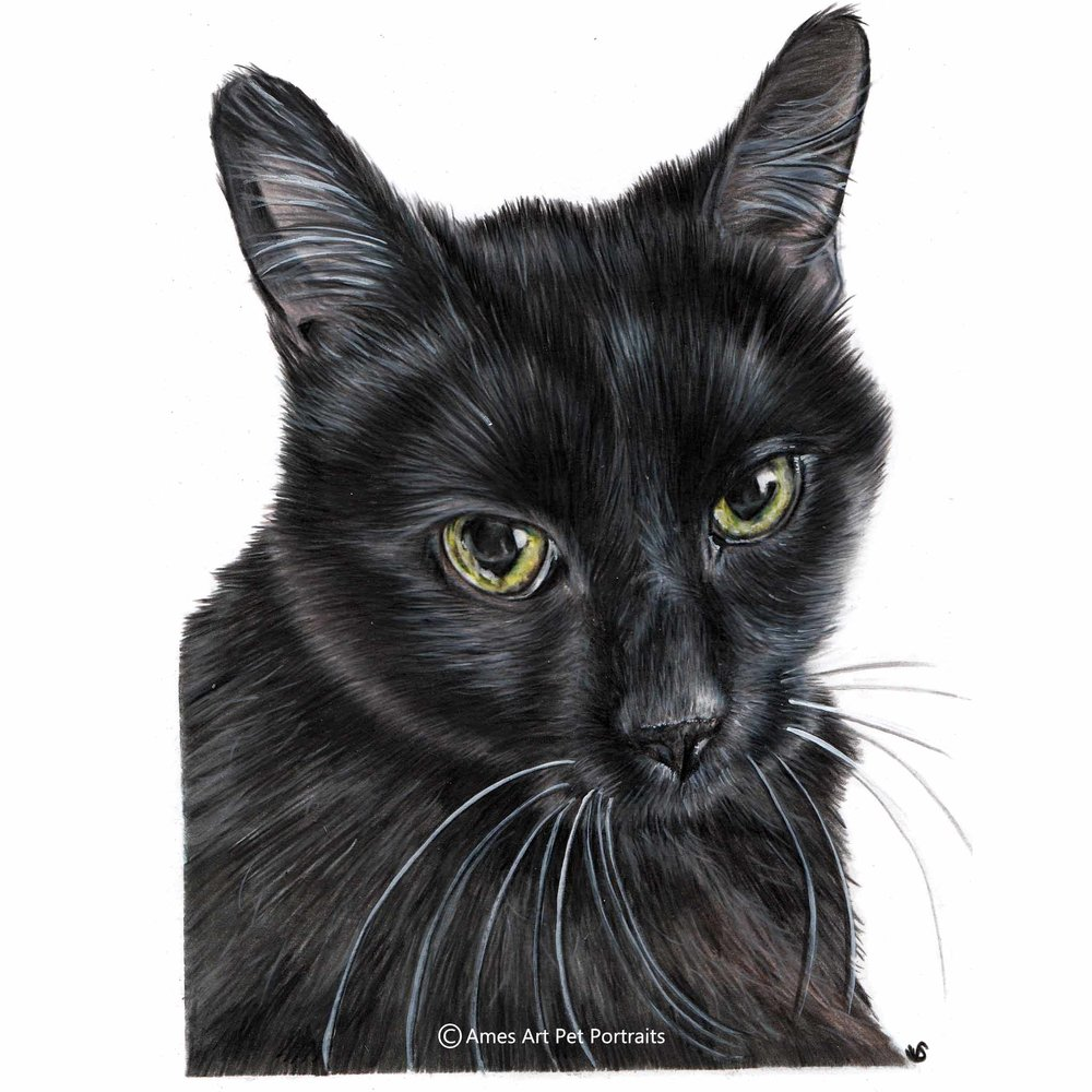 'Bella' - USA, 8.5 x 11.7 inches, 2017, Colour Pencil Cat Portrait by Sema Martin