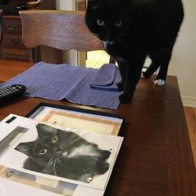 tuxedo cat charlie and his colour pencil portrait