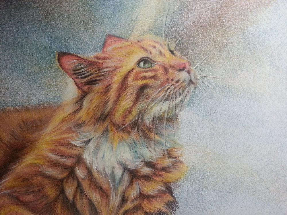 'Jenny' Cat Portrait, Size: A3, Medium: Derwent Drawing, Colour Pencil, White paint.