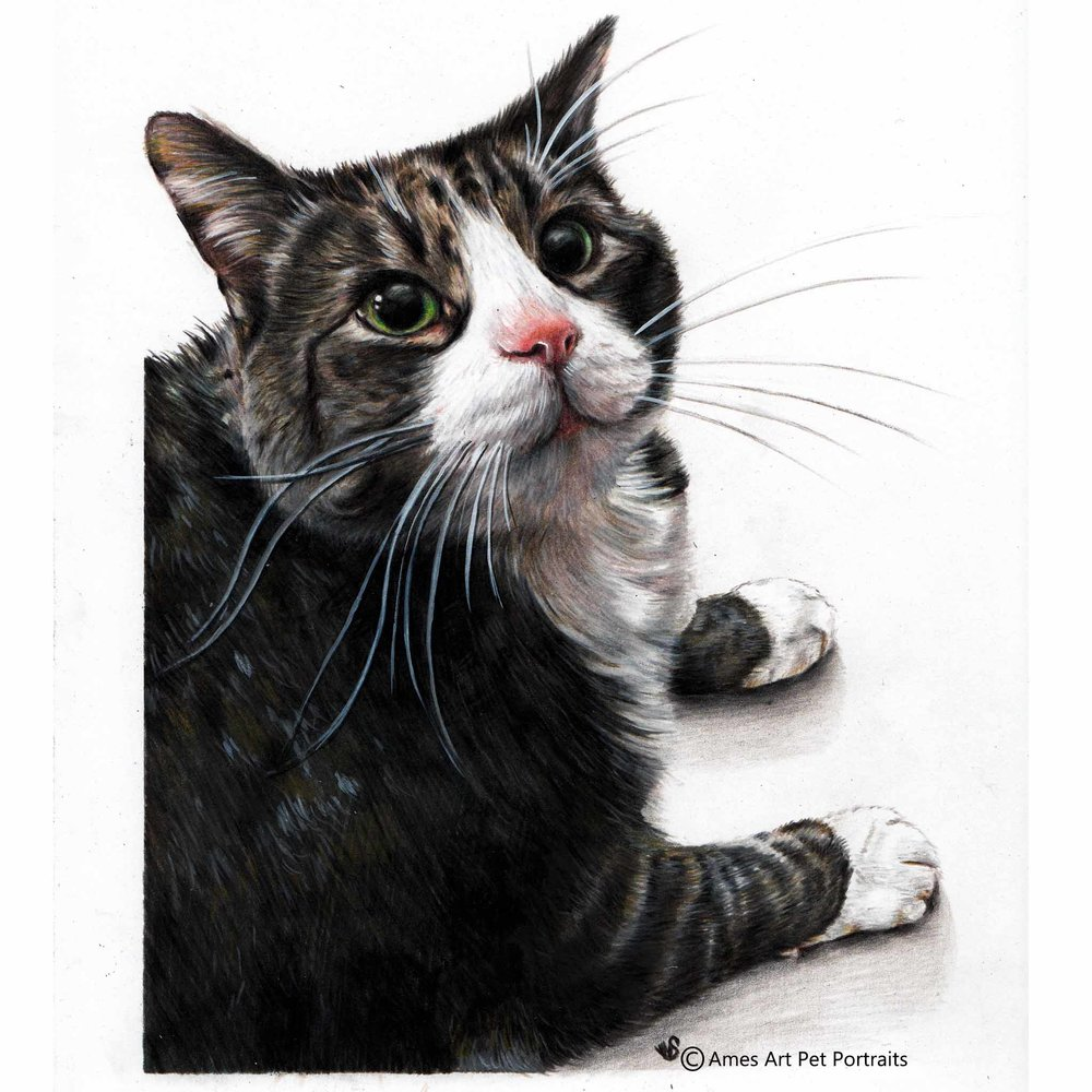 'Brisket' - USA, 8.5 x 11.7 in, 2017, Color Pencil Cat Portrait