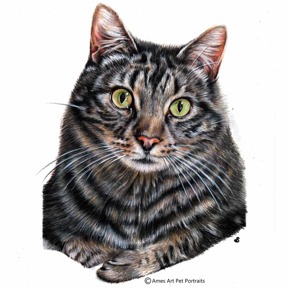 'Cooper' - AUS, 11.7 x 8.3 inches, 2017, Colour Pencil Cat Portrait