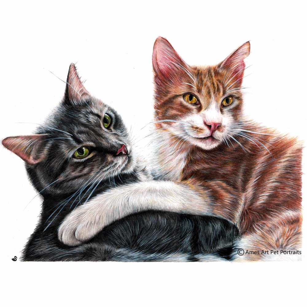 'Junior & Jack' - SPA, 11.7 x 16.5 in, 2017, Colour pencil Cat Portrait