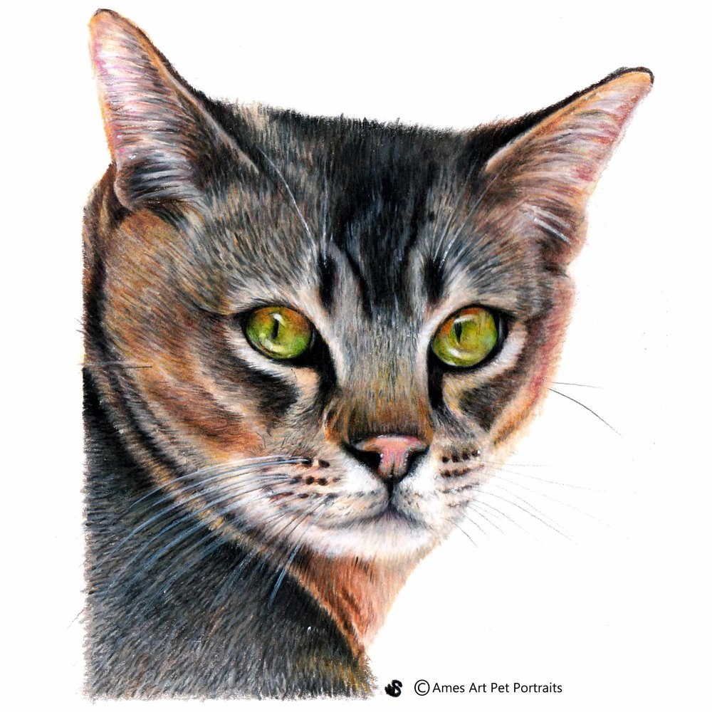 'Makwela' - UK, 5.8 x 8.3 inches, 2017, Colour Pencil Cat Portrait