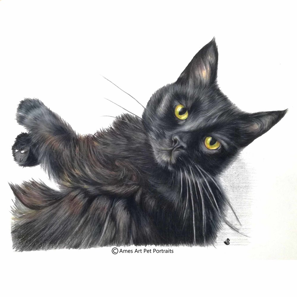 'Piggy' - USA, 11.7 x 16.3 inches, 2017, Color Pencil Cat Portrait