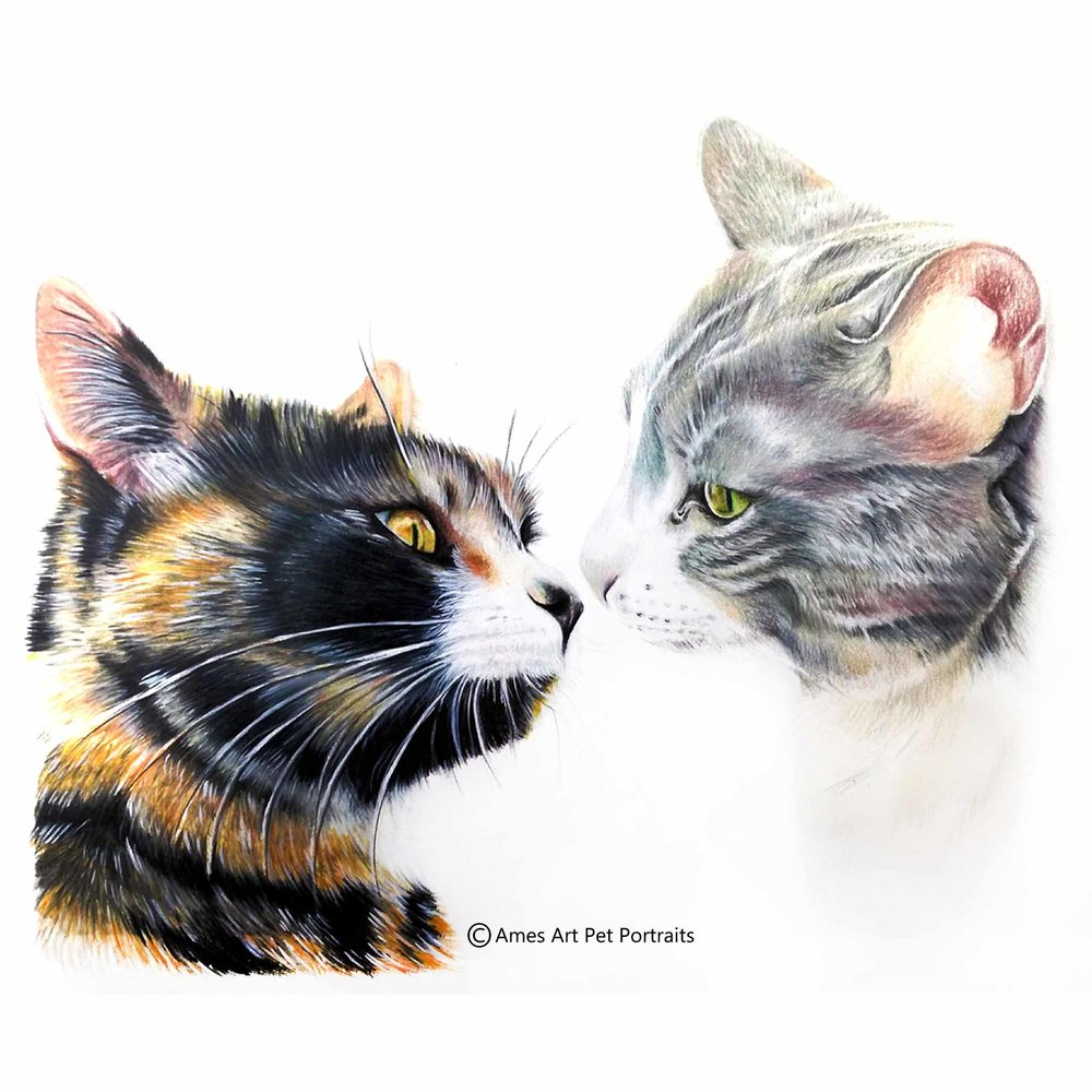 'Leeloo & Sophie' - USA, 11.7 x 16.5 inches, 2017, ColorPencil Cat Portrait