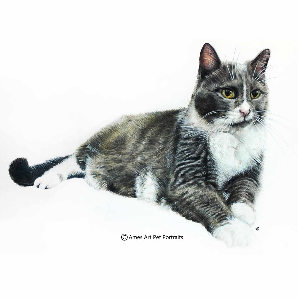 'Miss Boots' - USA, 11.7 x 16.5 inches, 2017, Color Pencil Cat Portrait