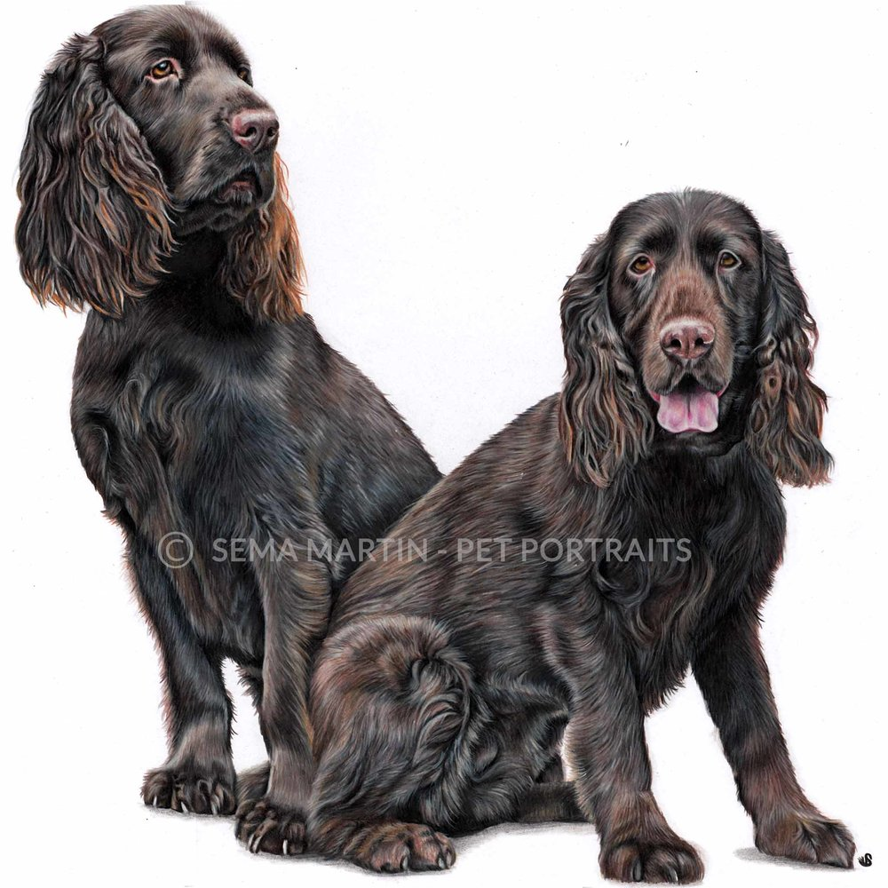 'Mo'i & Lea', USA, 16.5 x 23.4 inches, 2018, Color Pencil Dog Portrait