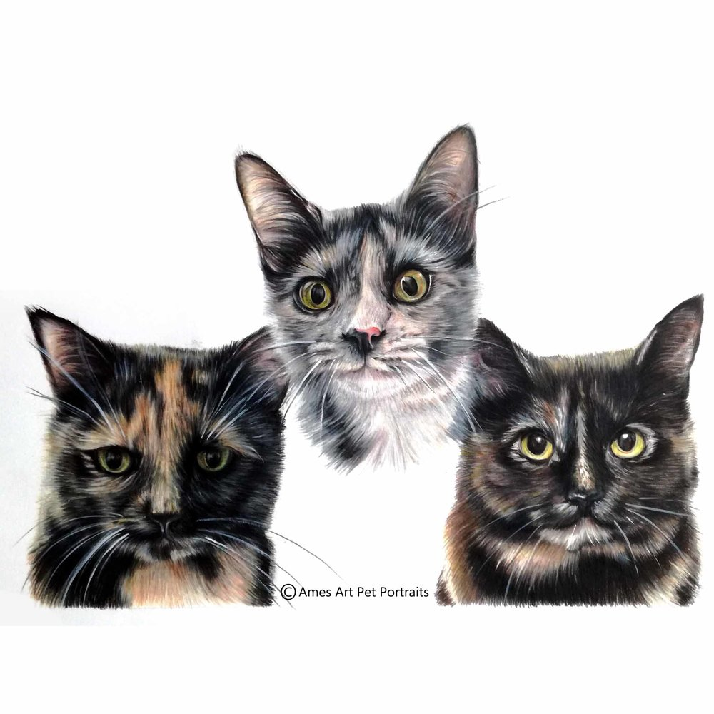 Tabitha, Millie and Lucy.jpg